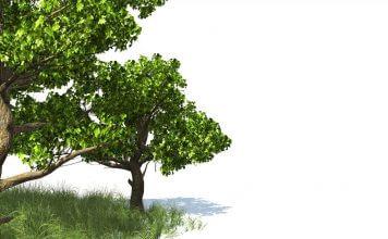 dwa zielone drzewa na polanie