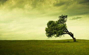 pochylone zielone drzewo na polanie